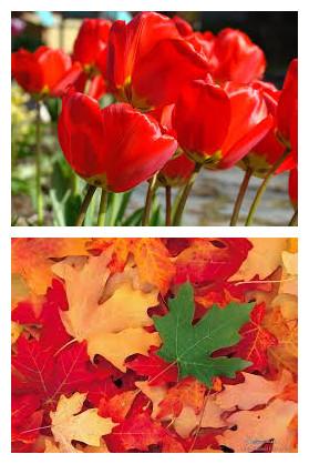 le rouge au printemps et en automne